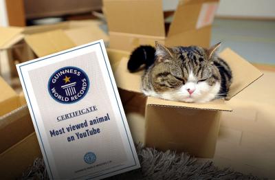 Самый популярный кот на YouTube попал в Книгу рекордов Гиннесса